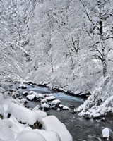 Snow On Boulder Creek, Oregon Fine-Art Print