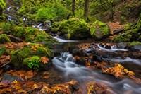 Autumn Color Along Starvation Creek Falls In, Oregon Fine-Art Print