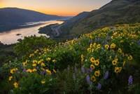 Wildflowers At Rowena Plateau,  Oregon Fine-Art Print