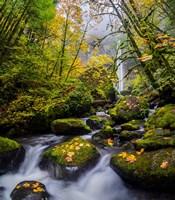 Mccord Creek In Autumn, Oregon Fine-Art Print