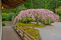 Weeping Cherry Tree, Portland Japanese Garden, Oregon Fine-Art Print