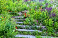 Summer Flowers On Stairs In Pennsylvania Fine-Art Print