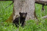 Black Bear Cub Next To A Tree Fine-Art Print