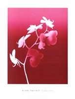 Summer Orchid Fine-Art Print