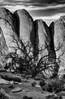 Gnarled Tree Against Stone Fins, Arches National Park, Utah (BW) Fine-Art Print
