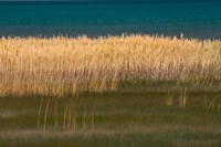 Grasses Blowing In The Breeze Along The Shore Of Bear Lake, Utah Fine-Art Print