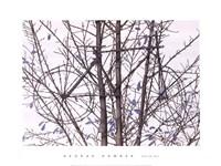 Tour de Tree Fine-Art Print