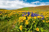 Spring Wildflowers Cover The Meadows At Columbia Hills State Park Fine-Art Print