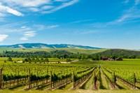 Vineyard Landscape In Walla Walla Fine-Art Print