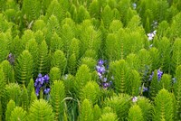 Horsetail, Wild Hyacinth, And Grays Harbor Fine-Art Print
