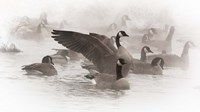 Artistic Shot Of Canadian Geese In The Mist Fine-Art Print