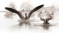 Canadian Geese Land In A Winter's Pond Fine-Art Print