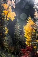 Sunshine On An Autumn Forest Fine-Art Print