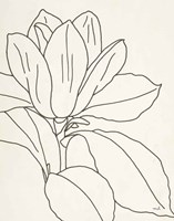 Magnolia Line Drawing v2 Crop Fine-Art Print