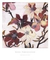 Magnolias XIX Fine-Art Print