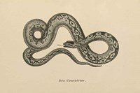 Vintage Boa Constrictor Fine-Art Print