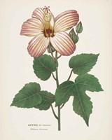 Antique Botanical XXVII Cream Fine-Art Print