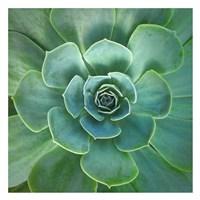 Glowing Succulent Fine-Art Print