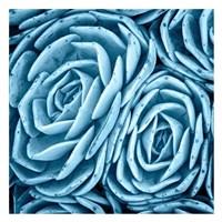 Nestled Succulents Fine-Art Print
