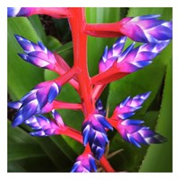 Purple and Pink Fine-Art Print