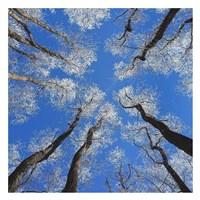Reaching Skyward Fine-Art Print