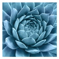 Silvery Blue Agave Fine-Art Print