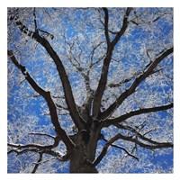 Snow Covered Tree Fine-Art Print