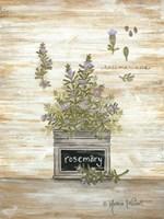 Rosemary Botanical Fine-Art Print