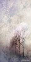 First Light Winter Forest Fine-Art Print