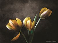 Contemporary Floral Tulips Fine-Art Print