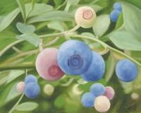 Summer Harvest Fine-Art Print