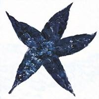 Midnight Starfish Fine-Art Print