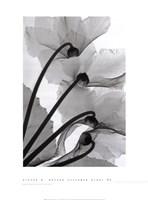 Cyclamen Study Fine-Art Print