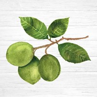 Citrus Garden II Shiplap Fine-Art Print