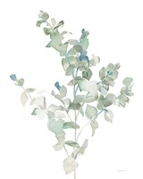 Eucalyptus II Cool Fine-Art Print