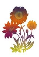 Color Bloom 2 Fine-Art Print