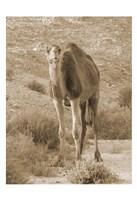 Desert Runner 2 Fine-Art Print