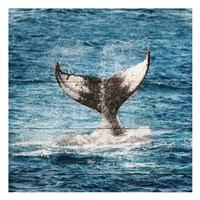 Tail Of The Whale Fine-Art Print