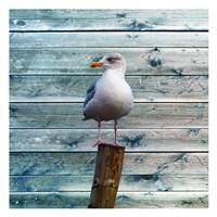 Bay Bird Fine-Art Print