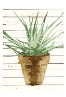 Wood Plant Pot Fine-Art Print