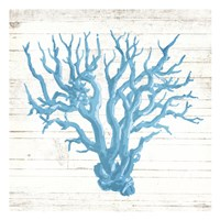 Coral On Wood Mate Fine-Art Print