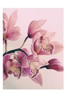 Pink Orchids Fine-Art Print