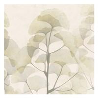 Sunkissed Ginko Fine-Art Print