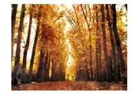 Fallow Your Path Fine-Art Print