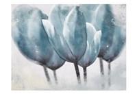 Three Tulip Blue Fine-Art Print