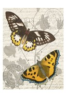 Butterfly Travel 1 Fine-Art Print