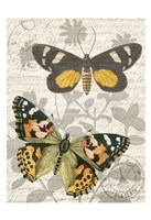Butterfly Travel 2 Fine-Art Print