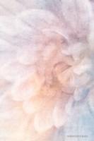 Soft Dahlia Pastel Blue Lilac Fine-Art Print