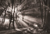 Black and White Rays Fine-Art Print