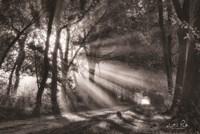 Black and White Rays Fine-Art Print